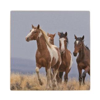 Wild Mustangs Wood Coaster