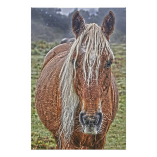 Wild New Forest Flaxen-maned Pony England Poster