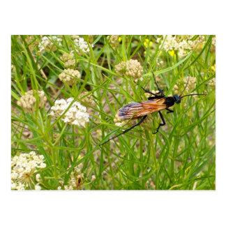 Wild New Mexico Wasp Postcard