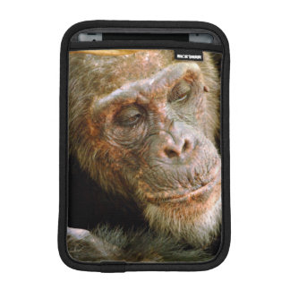 Wild Old Male Chimpanzee (Pan Troglodytes) iPad Mini Sleeve