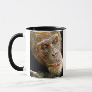 Wild Old Male Chimpanzee (Pan Troglodytes) Mug