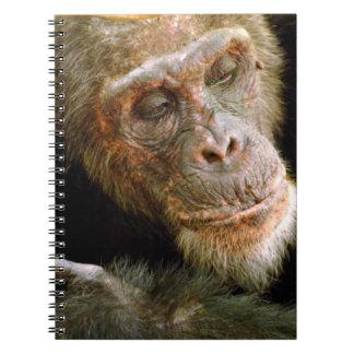 Wild Old Male Chimpanzee (Pan Troglodytes) Notebook