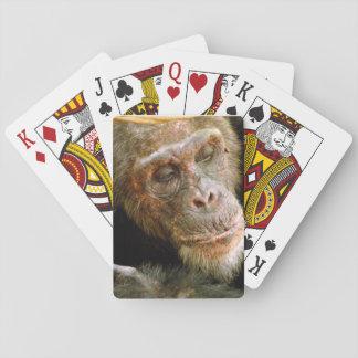 Wild Old Male Chimpanzee (Pan Troglodytes) Poker Deck