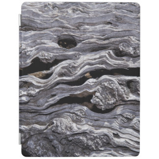 Wild Olive Tree | Great Karoo, South Africa iPad Cover