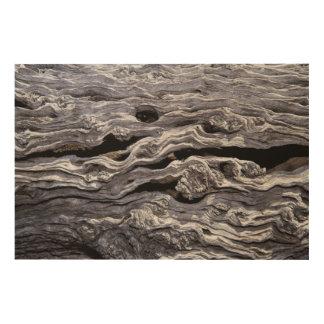 Wild Olive Tree | Great Karoo, South Africa Wood Wall Art
