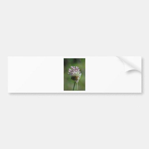 Wild Onion Wildflower Crow Garlic - Allium vineale Bumper Sticker