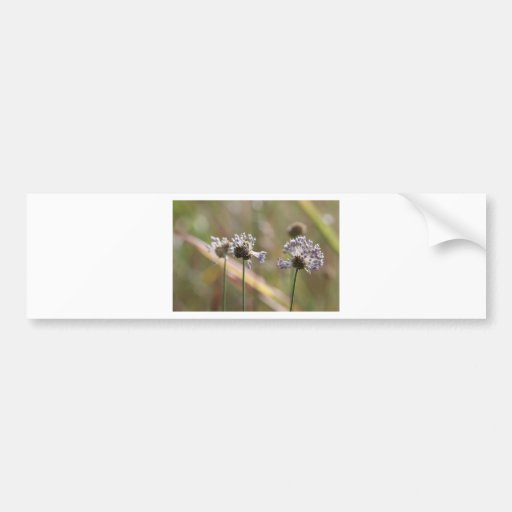 Wild Onion Wildflowers - Wild Onion - Crow Garlic Bumper Sticker