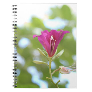 Wild Orchid Tree Flower Notebook