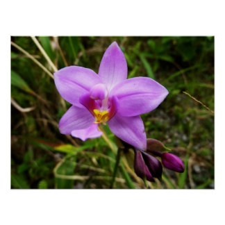 Wild Orchid Tropical Flower Poster