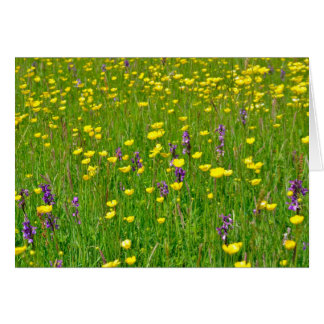 Wild Orchids and Buttercups in measdow Card