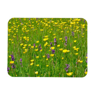 Wild Orchids and Buttercups Magnet