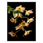 Wild Orchids Posters