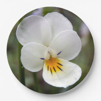 Wild Pansy Paper Plates