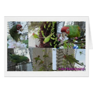 Wild Parrots Collage Greeting Card
