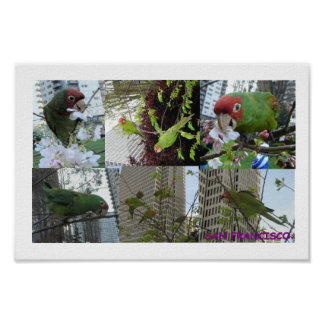 Wild Parrots Collage Poster