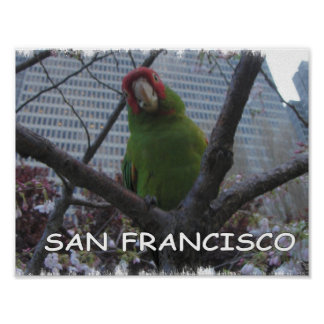 Wild Parrots of Telegraph Hill Poster