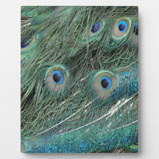 wild peafowl feathers plaque