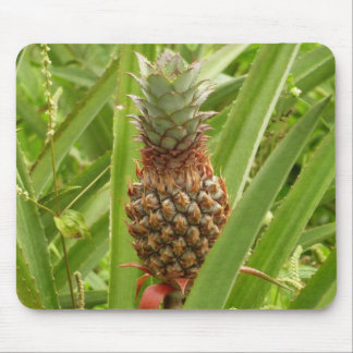 Wild Pineapple Tropical Fruit in Nature Mouse Mat