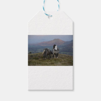 Wild Ponies Gift Tags