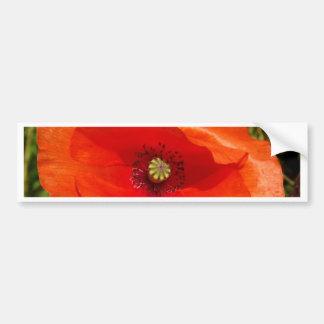 Wild poppy bumper sticker