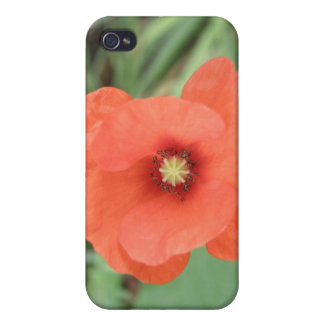 Wild Poppy Flower  iPhone 4 Case