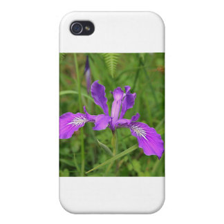 Wild Purple Iris iPhone 4 Covers