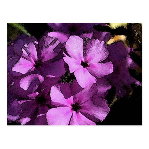 Wild Purple Phlox from scene in South Texas Post Card