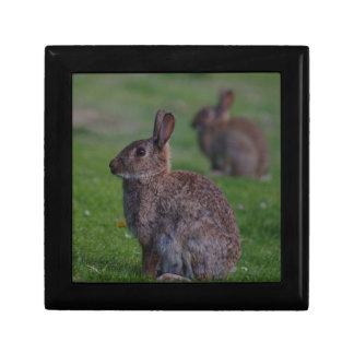 Wild Rabbit Gift Box
