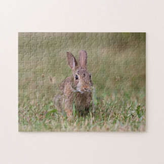 Wild rabbit jigsaw puzzle
