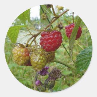 Wild Raspberri Classic Round Sticker