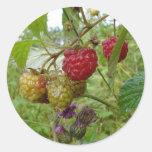 Wild Raspberri Round Sticker