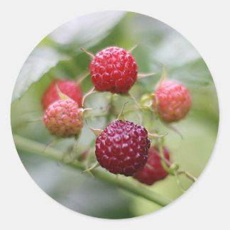 Wild Raspberries Classic Round Sticker