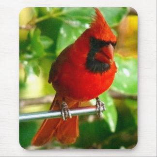 Wild Red Cardinal in Hawaii Mouse Mat