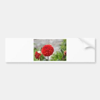 Wild red Dahlia Bumper Sticker