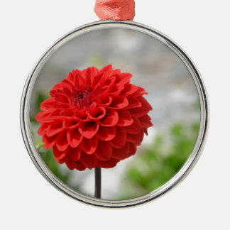 Wild red Dahlia Christmas Ornament