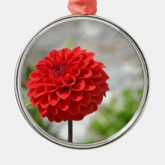 Wild red Dahlia Silver-Colored Round Decoration