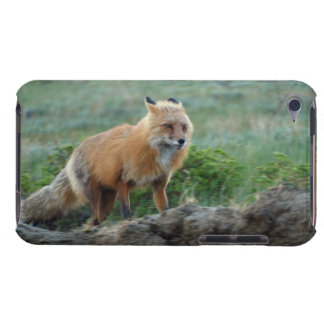 Wild Red Fox Animal Wildlife Wild Animal Fox-Lover iPod Touch Cover