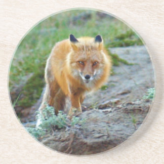 Wild Red Fox Vixen Wildlife Photo Art Drink Coaster