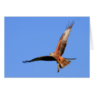 Wild Red Kites Card