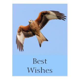 Wild Red Kites Postcard