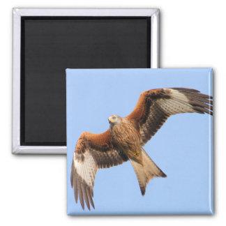 Wild Red Kites Square Magnet