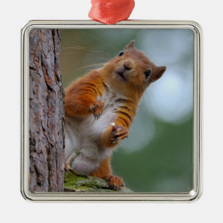 Wild Red Squirrel in the Scottish Highlands Photo Christmas Ornament