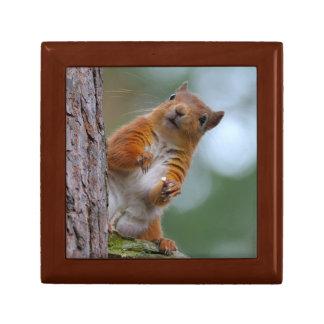 Wild Red Squirrel in the Scottish Highlands Photo Gift Box