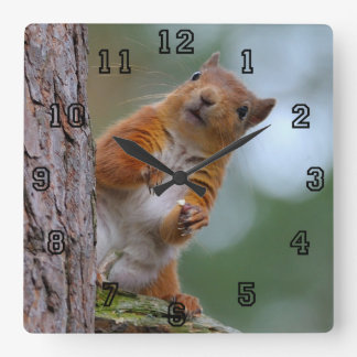 Wild Red Squirrel in the Scottish Highlands Photo Square Wall Clock