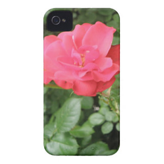 Wild Rose Blackberry Case