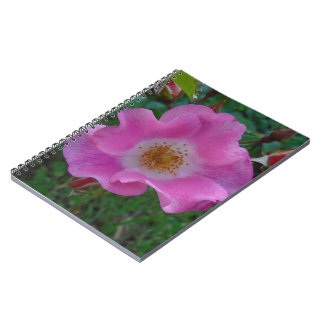 wild rose blooms cover notebook