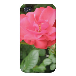 Wild Rose  Case For iPhone 4