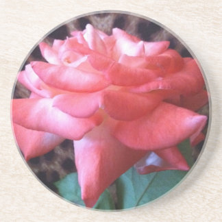 Wild Rose Coaster