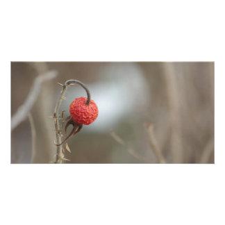 Wild Rose Fruit Photocard Photo Card