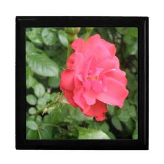 Wild Rose Gift Box